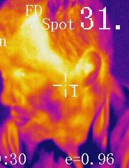 Hot head: the infrared camera shows hotter areas with lighter colors, in addition to providing a digital reading for the targetted area