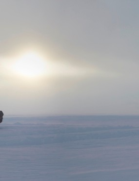 Maria Leijerstam is poised for an 800km journey to the South Pole. She'll probably have to pull the trike some of the way