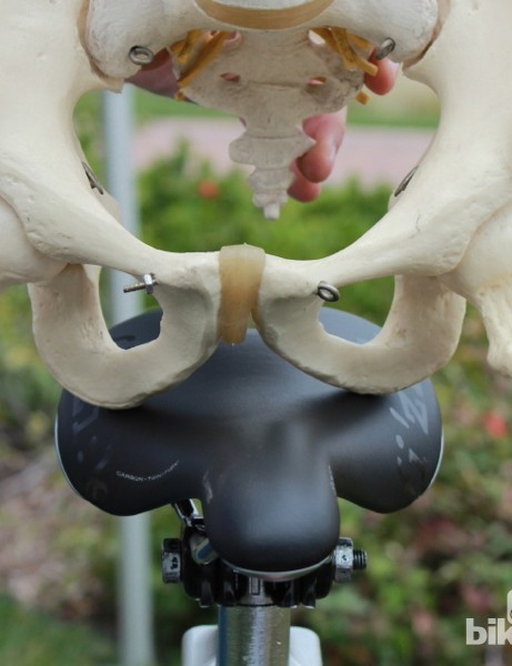 On most saddles, having the sit bones supported is one of the primary goals