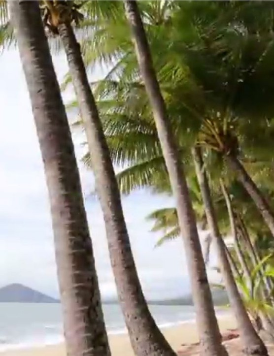 Paradise - palm trees line the coast of Cairns, Palm Cove and Port Douglas