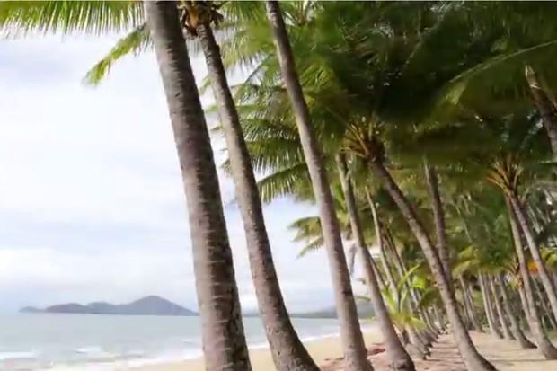 Paradise - palm trees line the coast of Cairns, Palm Cove and Port Douglas