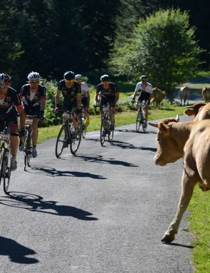 The roaming wildlife is a feature of riding in the Pyrenees