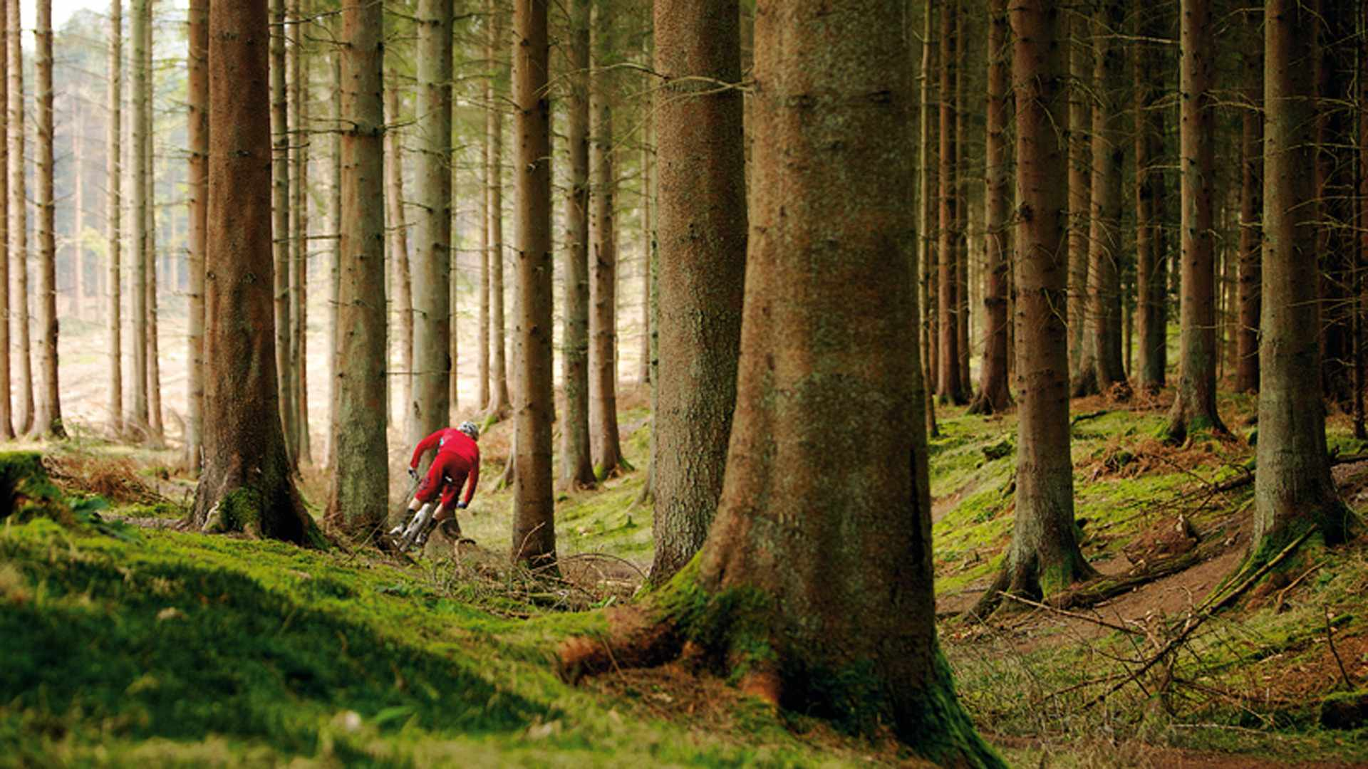 The Forest of Dean is the ideal place to get to grips with a potential new purchase