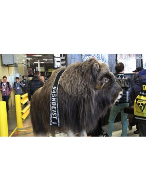 This yak was hanging out at the 45NRTH booth keeping an eye on the winter component specialist's new Flowbeist and Dunderbeist tubeless fat bike treads