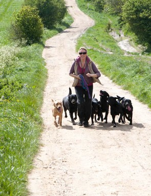 Multiple dogs off the lead – better slow down