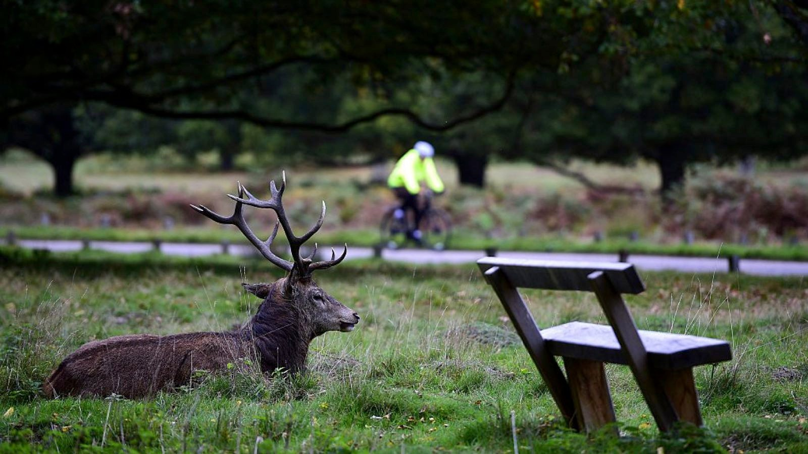 Richmond Park's Full Sawyers Uphill was the most popular Strava segment of 2015