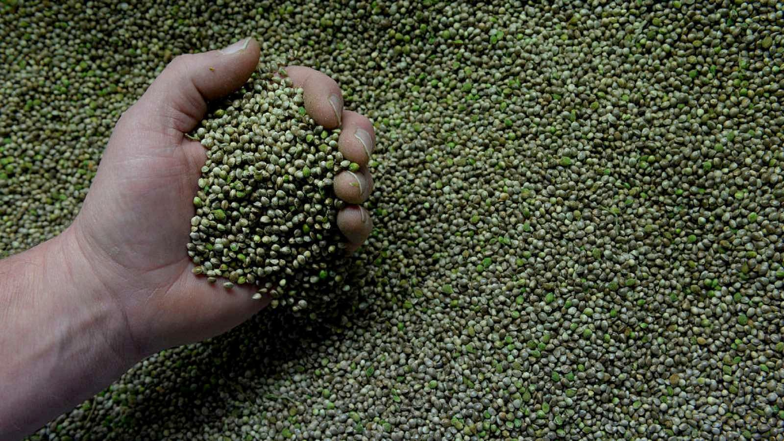 Hemp seeds are rich in iron and magnesium, essential for oxygen transportation and muscle contractions