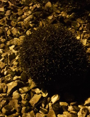 Our test pilot shows his sensitive side by rescuing a lost hedgehog