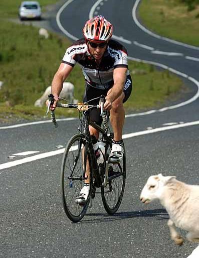 Sheep avoidance is a useful skill on the TotBM
