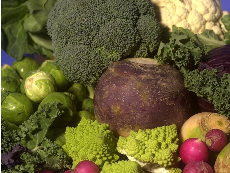 Not just for wimps: Some brassica vegetables like broccoli are high in salvestrols
