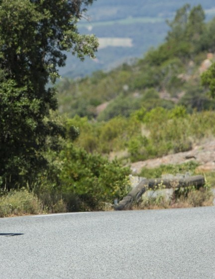 The seatpost's elastomer takes the sting out of rougher roads