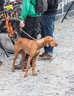 This perfect pup looks like an ideal trail buddy
