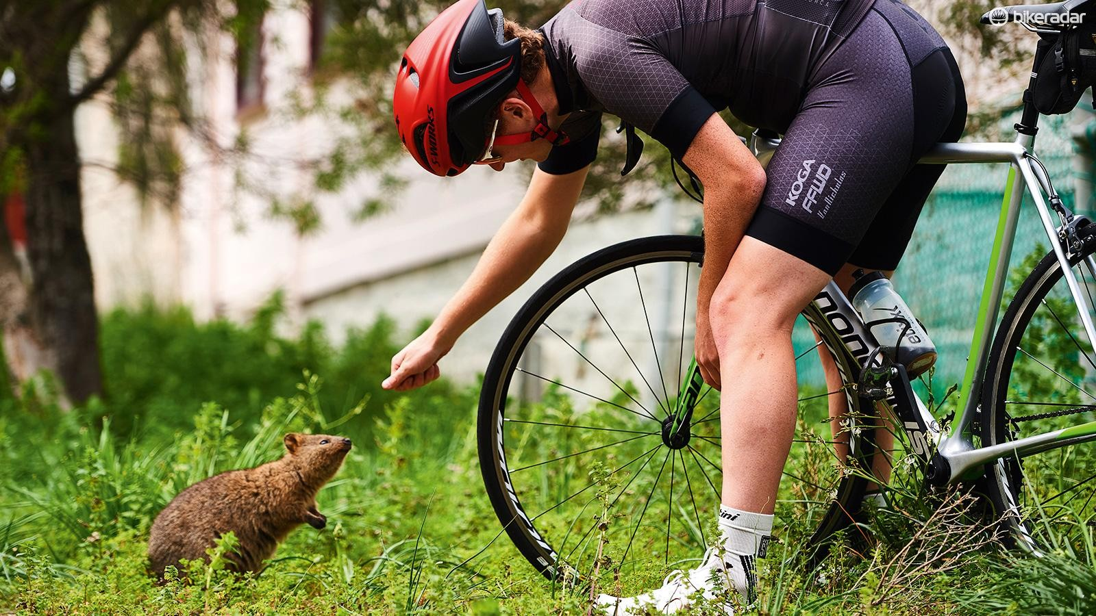 """""""G'day, mate!"""" John makes friends with a Rottnest quokka"""