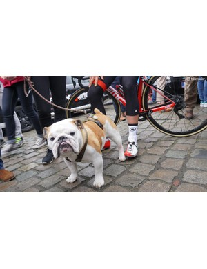Drucker's dog Elvis features on the customised shoes