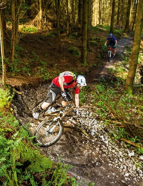 Haldon Forest in Exeter provides the South West of England with some great all-weather riding