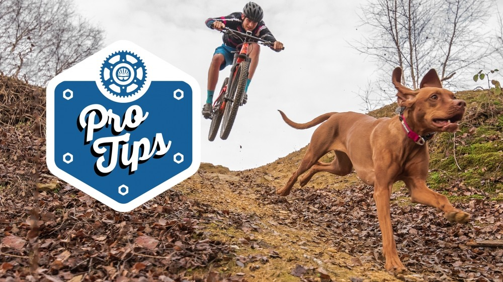 Tom and Ruby talk us through how to train your own trail dog