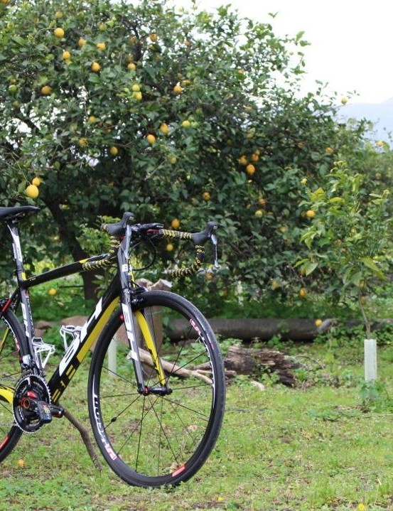Hey we're in Sicily, we couldn't resist taking pics in a lemon grove with Mt. Etna in the background