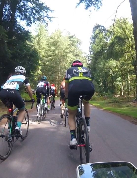The New Forest offers rolling terrain through open plains and heavily wooded areas