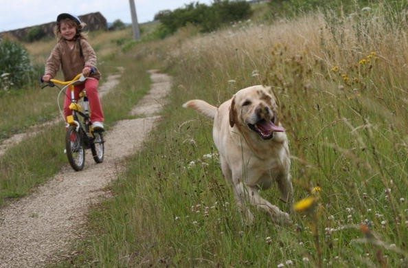 1,000 kids bikes - but no Labradors - are affected by the Australian recall, along with 5,000 adult