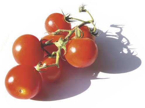Tomatoes contain plenty of cancer-beating lycopene