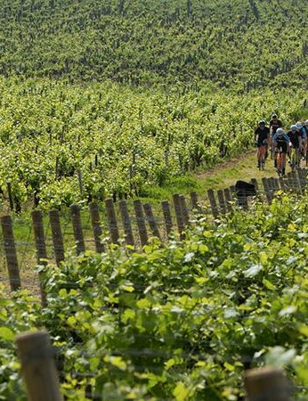 We rode the Cross Carbon up and down vineyard tracks, singletrack wooded sections and gravel roads