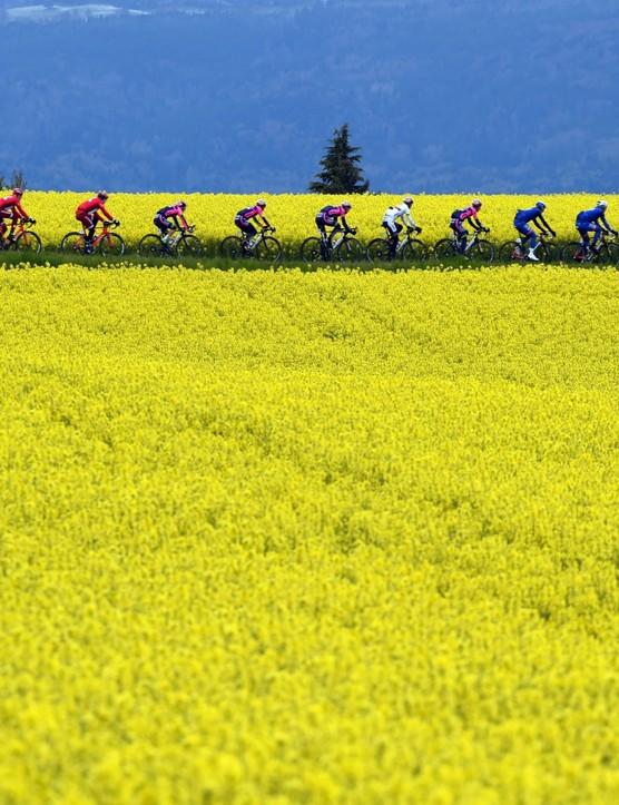 Riders at the Tour de Romandie