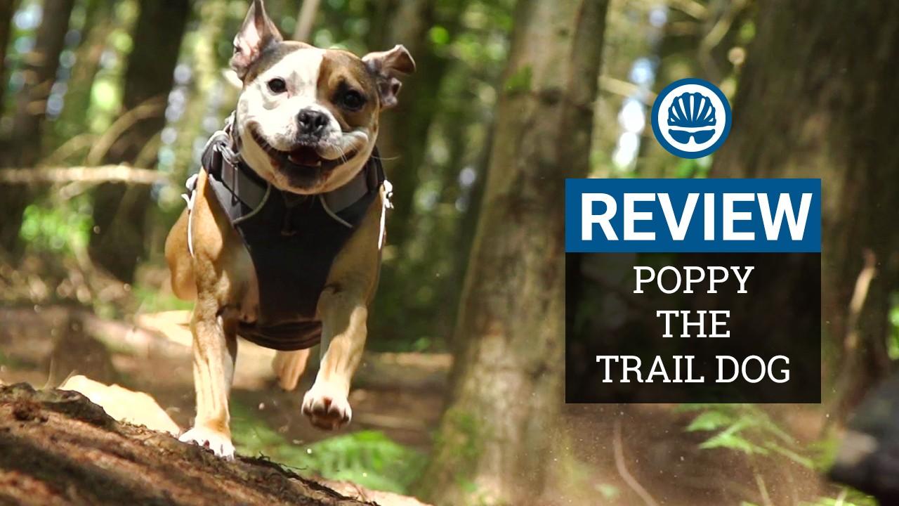 Poppy the trail dog - a BikeRadar review