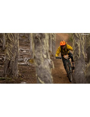 ...to loamy forests...