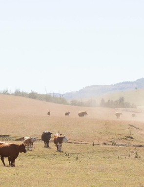 ...to open grasslands filled with soon-to-be-steak dinners