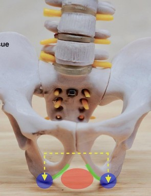 The pelvis informs us how saddle shape should mirror our anatomy — elevated areas for the sit bones and a centreline recessed or cutout area for vascular and nerve tissue
