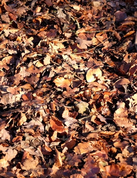 The leaves I should have been skidding over