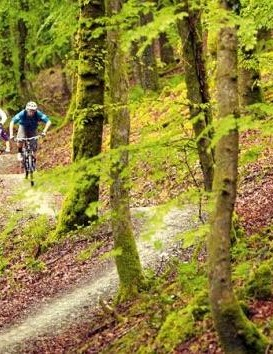 Trail centres must armour their trails — quiet local woods prove there's no place like loam