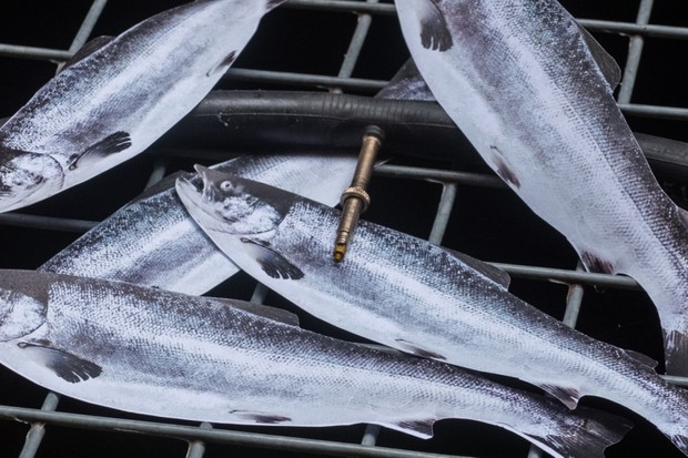 We finally answer why inner tubes smell of fish