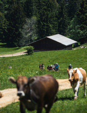 male cyclist riding gravel road bikes in country side with cows