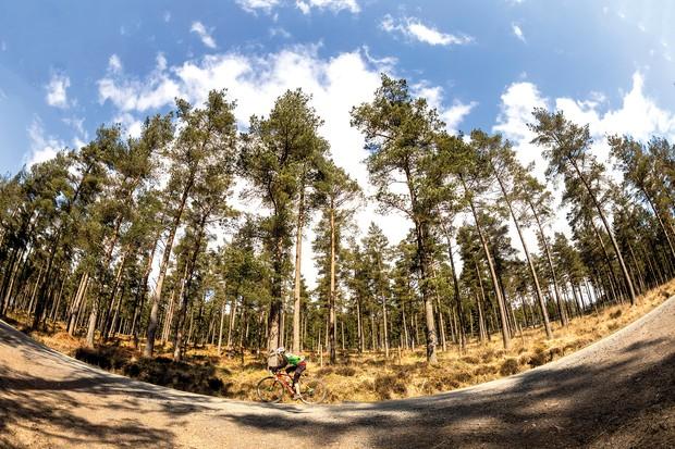 male cyclist riding gravel bike through woods