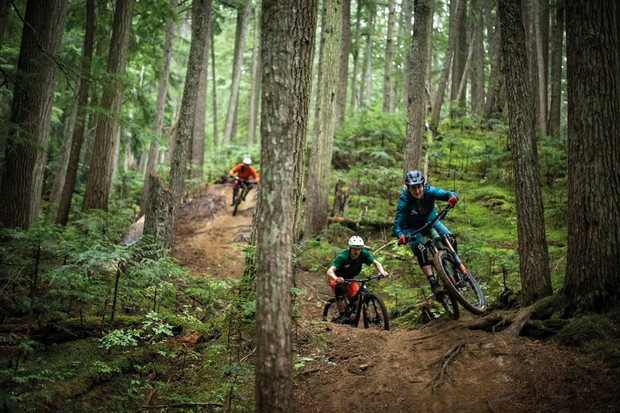 Cyclists riding mountain bikes through woodland