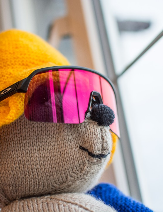 Paddington bear wearing Oakley Sutro Lite glasses