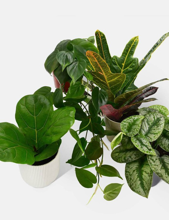 PlantSavers Green With Envy pack