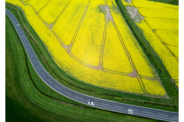 Rapeseed and country road in Warwickshire