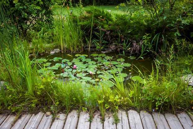 Small garden pond