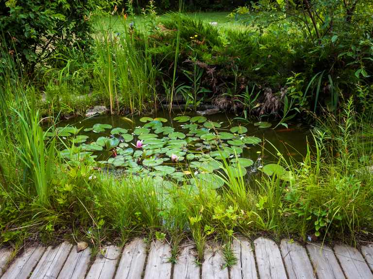 Garden pond guide: how to look after your pond and wildlife to spot
