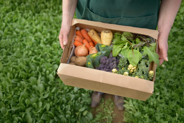 Guide to Britain's best local organic veg box schemes ...