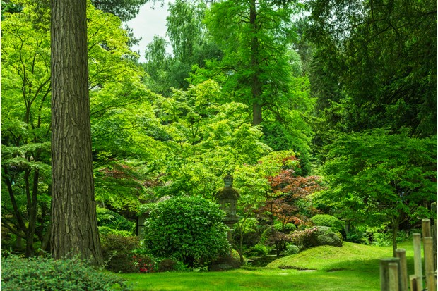 Tatton Park woodland