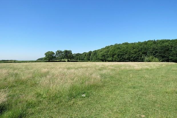 Gotham Hill Wood, Nottinghamshire