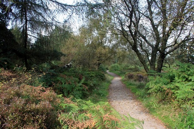 Whitwell Moor, South Yorkshire