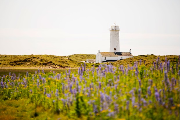 Lighthouse and wildflowers in Cumbria
