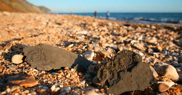 Britain's best fossil hunting destinations