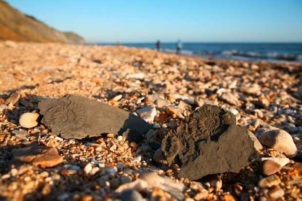 Fossils on charmouth beach, on the jurassic coast of Dorset.