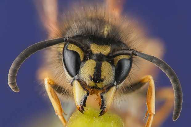 Best insect websites - Countryfile com