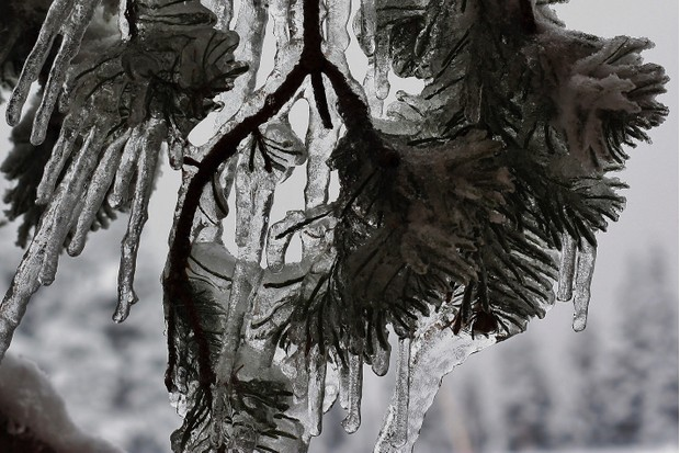 Natural ice sculptures, UK